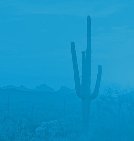 outline of saguaro cactus image